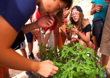 Summer schoolers visit Council's vegetable patch for kids